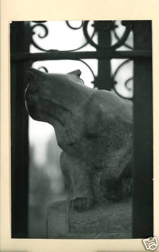RPPC CAT STATUE IRON BARS A CUMMINGS PHOTO RP POSTCARD
