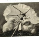 EASTER CHICKS W/ PARASOL 1906 BULLARD SHEAHAN POSTCARD