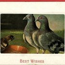 PIGEONS DOVES EATING FOOD BEST WISHES 1914 POSTCARD
