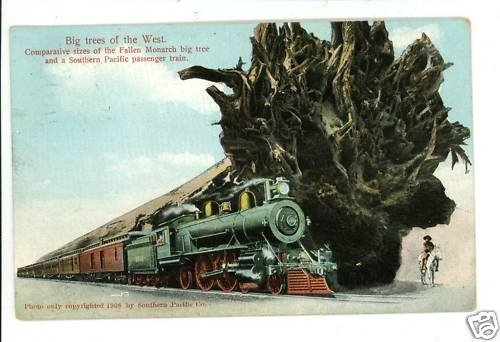 SOUTHERN PACIFIC RAILWAY TRAIN BIG TREES 1908  POSTCARD