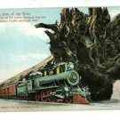 SOUTHERN PACIFIC RAILWAY TRAIN BIG TREES 1908  POSTCARD