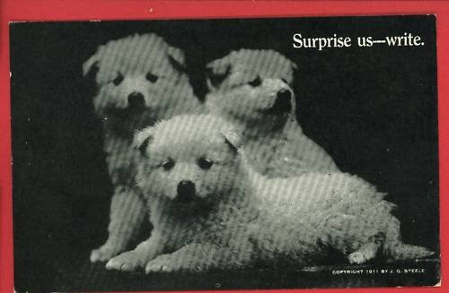 PUPPIES DOGS PUPPY SURPRISE US 1911 STEELE  POSTCARD