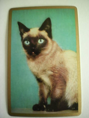 Vintage Siamese Cat Swap Playing Card