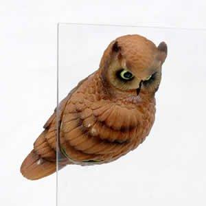 Window Fly Thru - Horned Owl