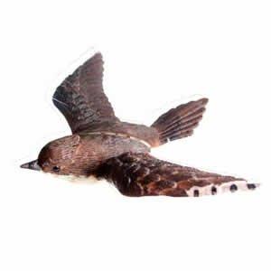 Window Fly Thru - Wren