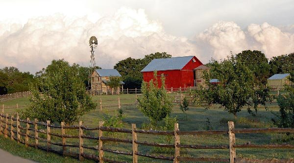 Homesteading Farming Gardening Raising Chicken,