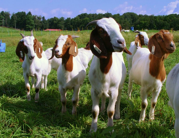 Raising Goats, Vegetables, Hydroponics, Forestry, Bees