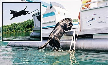 Pontoon Boat Retractable Ladder Prostep Ias Pro Step Tooner I