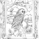 .Night Owl Iron on Hand Embroidery Pattern (original design)