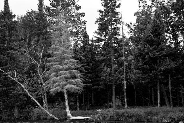 Lone Pine-8x12