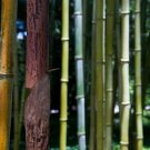 Bamboo-20x30
