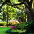 Savannah Dreams-20x30