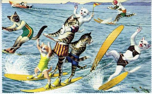 Mainzer - Cats Water Skiing - Postcard