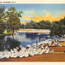 Vineland, NJ Postcard - Duck Farm 1976 (A497)