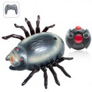 Wall Climbing RC Toy - Spider