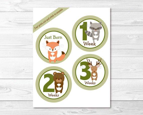 Woodland Animals Monthly Milestone DIY You Print PDF Stickers & Iron On Transfers #A191