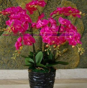 5 pcs simulation/artificial silk flower Phalaenopsis/moth orchid,Wedding/Christmas flowers