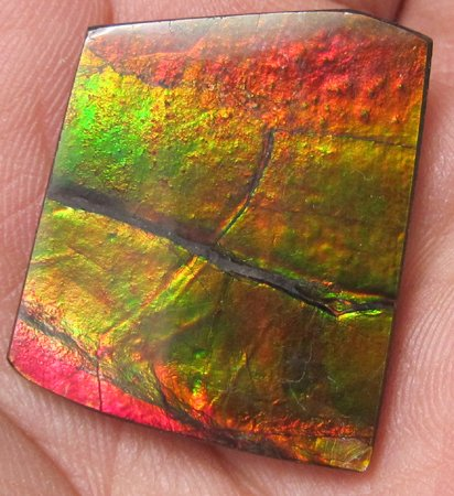 Nice huge ammolite ammonite gemstone hand crafted with unique color and pattern