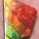 Fabulous huge Canadian multicolored ammolite ammonite gemstone
