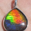 Ultimate Grade AA Multiple Colors Ammolite Ammonite Sterling Silver Pendant