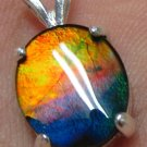 Rare Grade AA Blue Orange Color Ammolite Ammonite Sterling Silver Pendant