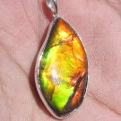 Grade A gold Fossil canadian ammolite in Sterling Silver Pendant