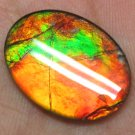 22x16mm MultiColor Ammolite Ammonite Gemstone for Pendant