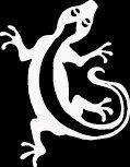 "(LIZ 1) 6"" white vinyl Lizard gecko climbing die cut decal sticker."