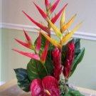 Tropical Heliconia Ginger and Anthirium arrangement