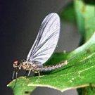 Blue Wing Olive Parachute Fly Fishing Flies- Twelve #16