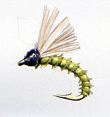 Olive Biot Serendipity Fishing Flies - Twelve Size 18