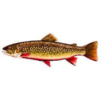 Janssen BROOK TROUT - 12 Hook Size 10 Fly Fishing Flies