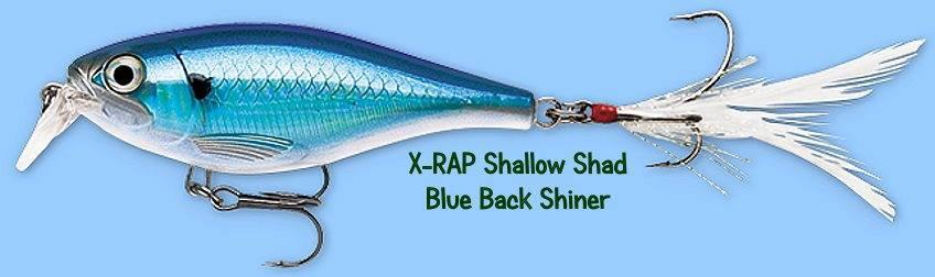Rapala X-RAP Blue Back Shiner (XRSHSS08 BBS) Shallow Shad Lure w/ SureSet Hook