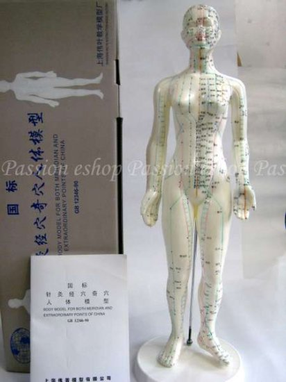 Acupuncture Meridian Points Display Model