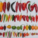 356 Chili Pepper Recipes eBook on CD Printable