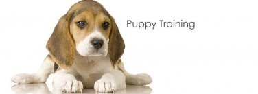 Puppy Training The Natural Way eBook on CD Printable