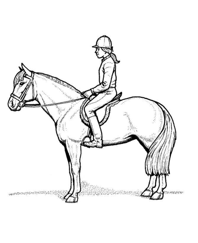 My Horse Printable Coloring eBook 32 Pages on a CD
