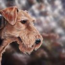 'Airedale Terrier'