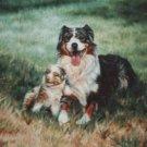 Austrailian Sheepdog