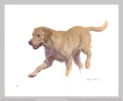 'A Study in Movement' (Yellow Lab)
