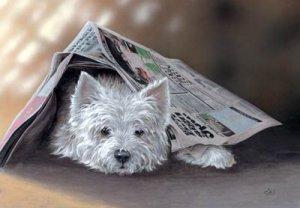 'Highland News'