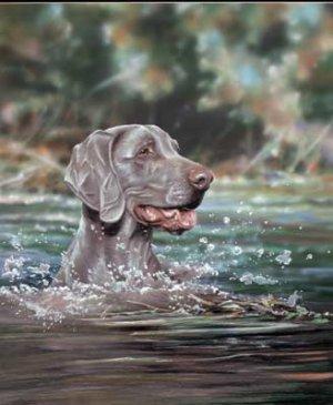 'A Good Swim'