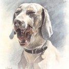 'A Good Yawn'