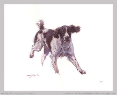 'A Study in Movement' (Springer Spaniel)