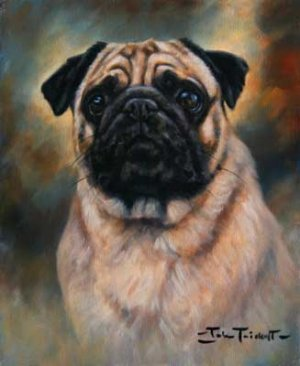 'Portrait of a Pug'