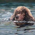 'Swimming'