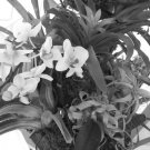 Orchids & Bromiliads