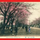 Antique JAPAN Japanese Hand Tinted Colored Postcard  Yokohama Park Cherry Blossoms People #EC58