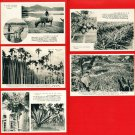 Lot of 5 Vintage Postcards FORMOSA Taiwan Buffalo Banana Palm Trees Coconut #EF40