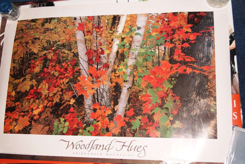 Woodland hues poster